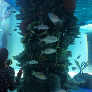 Fishtank in Sambil