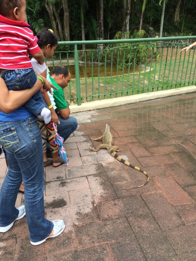 Iguana loose at the Zoo