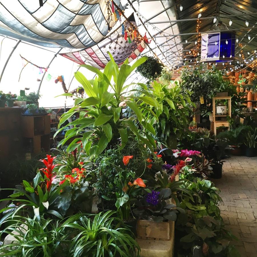 urban garden center